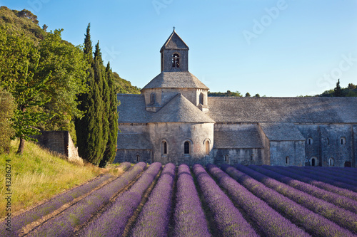Photo Stands Lavender Abbaye de Sénanque