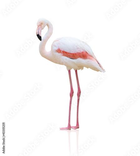 Foto op Aluminium Flamingo Portrait Of A Flamingo