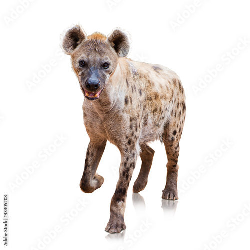 In de dag Hyena Portrait Of A Hyena