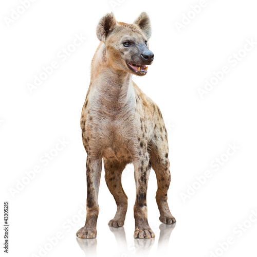 Deurstickers Hyena Portrait Of A Hyena
