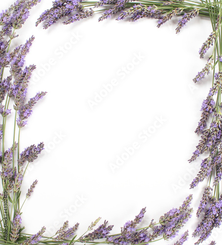 Photo Stands Lavender Cadre de lavande en bordure