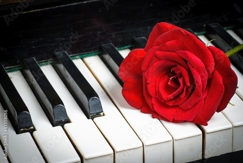 Papiers peints Rouge, noir, blanc piano keyboard and rose