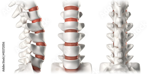 Fotomural Spine anatomy lumbar region - lateral, anterior, posterior