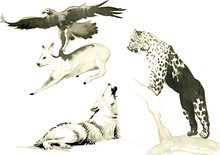 Animals - Hand Painted Illustrations Converted Into Vector