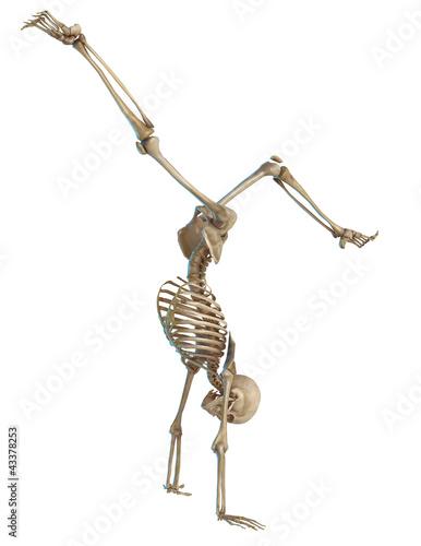 Fotografie, Obraz skeleton thinking pirueta.jpg