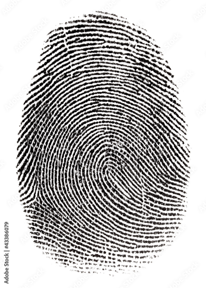 Fototapeta Real fingerprint in white background Super macro