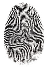 Real Fingerprint In White Back...