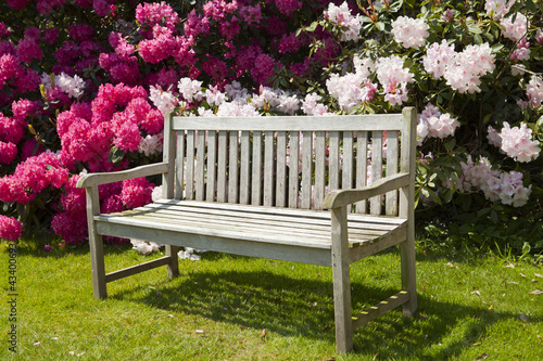 Fototapety, obrazy: Wooden bench in a garden with rhododendrons.