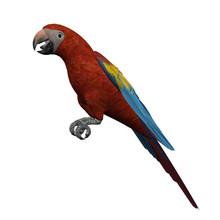 Beautiful 3D Scarlet Macaw