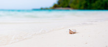 Hermit Crab Watching The Ocean On A White Beach In Maldives