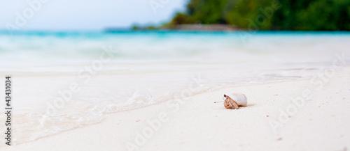 Fotografia, Obraz Hermit crab watching the ocean on a white beach in Maldives