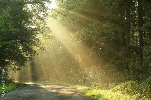 Foto auf Acrylglas Wald im Nebel Country road running through the spring deciduous forest at dawn