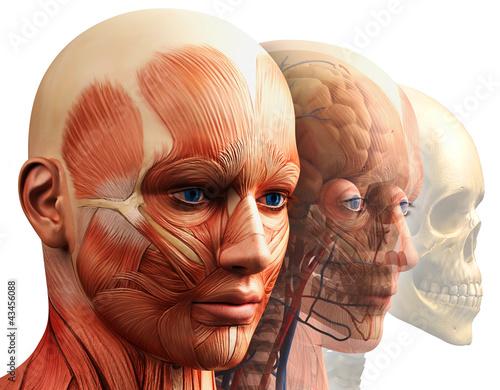 koncepcja-anatomii