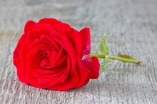 Rose On The Old  Plank