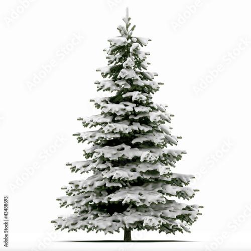 Fototapeta Sapin de Noël recouvert de neige sur fond blanc - rendu 3D obraz