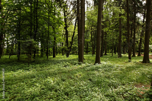 Spoed Foto op Canvas Sunshine in the green forest