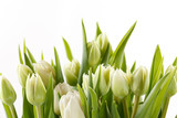 Fototapeta Tulipany - nice tulips