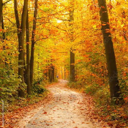 Spoed Foto op Canvas Weg in bos Pathway in the autumn forest