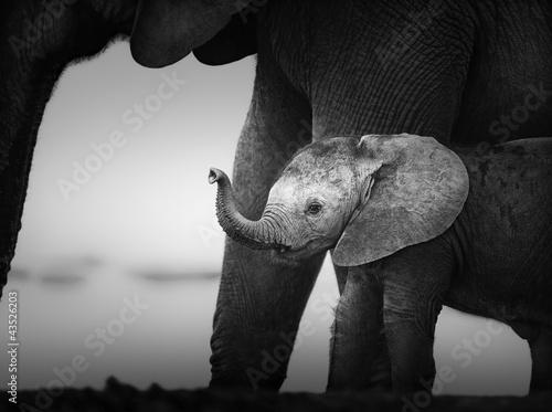 baby-elephant-obok-cow-przetwarzanie-artystyczne