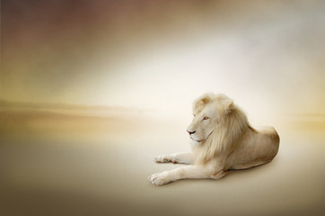 fototapeta luksusowe zdjęcie białego lwa