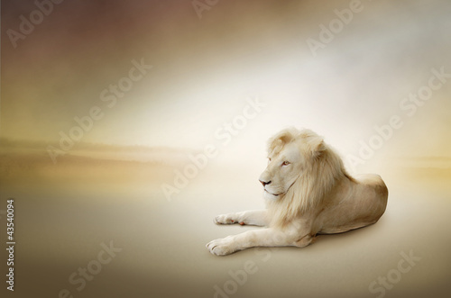 Foto op Plexiglas Leeuw Luxury photo of white lion, the king of animals