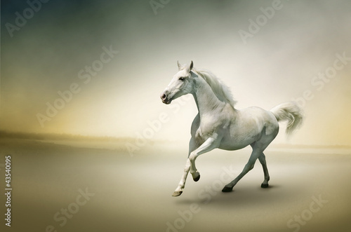 In de dag Paardrijden Stock Photo: White horse in motion
