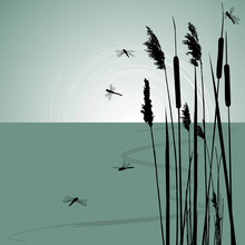 Reeds In The Water And  Few Dr...
