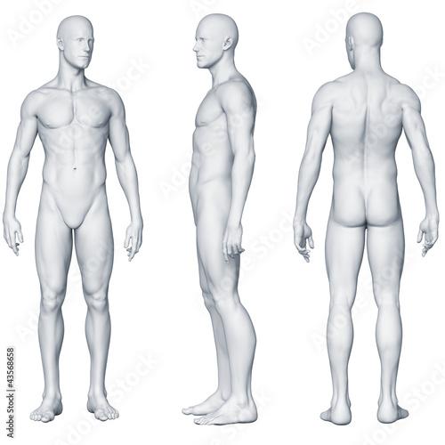 Láminas  Männlicher Körper - Seitenansichten