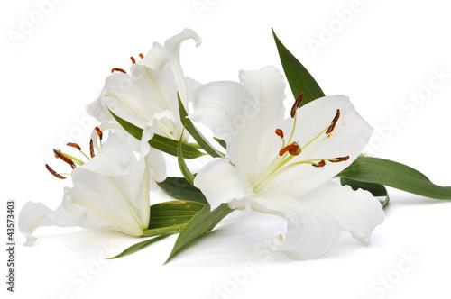 Fotografering white lily