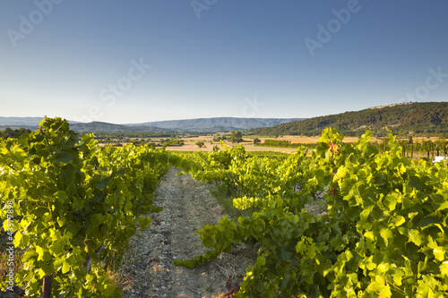 Papiers peints Vignoble Vineyards near to Gordes in Provence