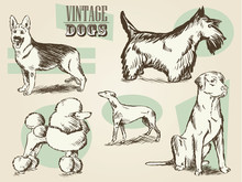 Classic Retro Ornate Dog Colle...