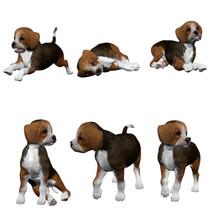 3D Beagle Puppies