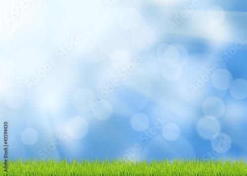 Foto op Plexiglas Groene grass