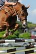 cheval sautant en concours