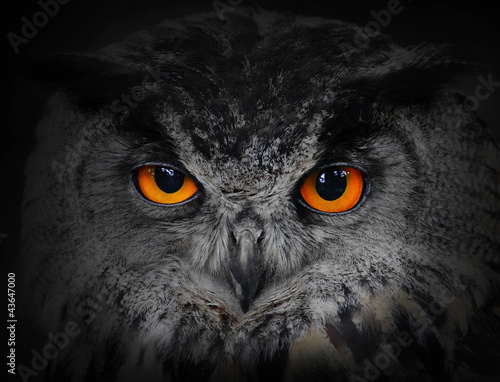 In de dag Uil The evil eyes. ( Eagle Owl, Bubo bubo).