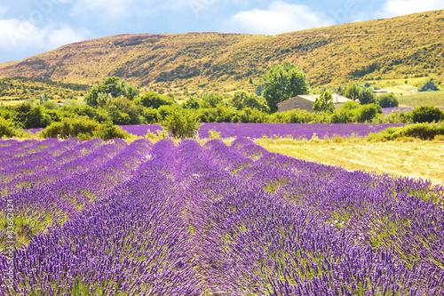 Tuinposter Zwavel geel Lavender in Provence
