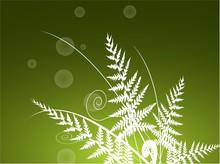 Fernsilhouette On Green Background