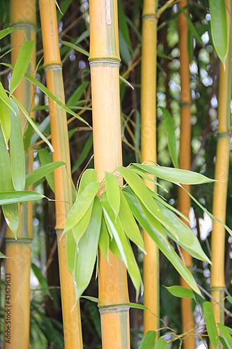 trzcina-bambusowa-i-liscie