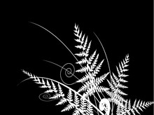 Fern Silhouette On Black Background