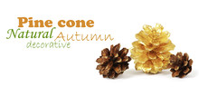 Two Pine Cones And One Golden Cone Over White Background With Sh