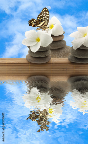 Deurstickers Stenen in het Zand concept détente; papillon, frangipanier, galets