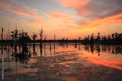 Fotomural Cypress at Dusk II