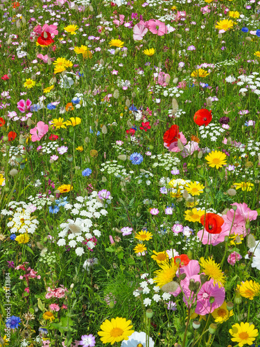 wild flower on a meadow - 43713884