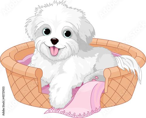 bialy-puszysty-pies