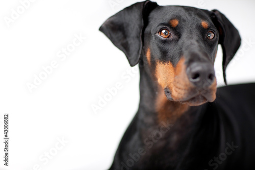 Photo Freundlicher Dobermann