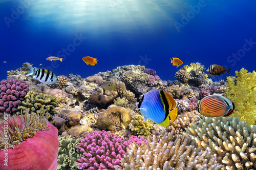 Poster Sous-marin Underwater world. Coral fishes of Red sea.