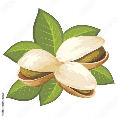 pistachio nuts #43821809