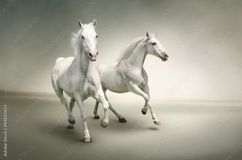 Fototapety, obrazy: White horses