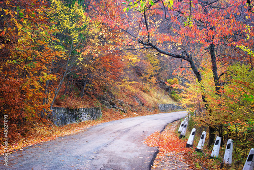 droga-w-lesie-jesienia