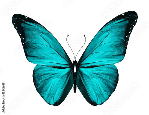 Fotografie, Obraz  Blue butterfly, isolated on white
